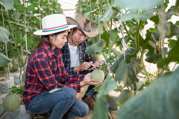 Young farmers are analyzing the growth of melon effects on greenhouse farms