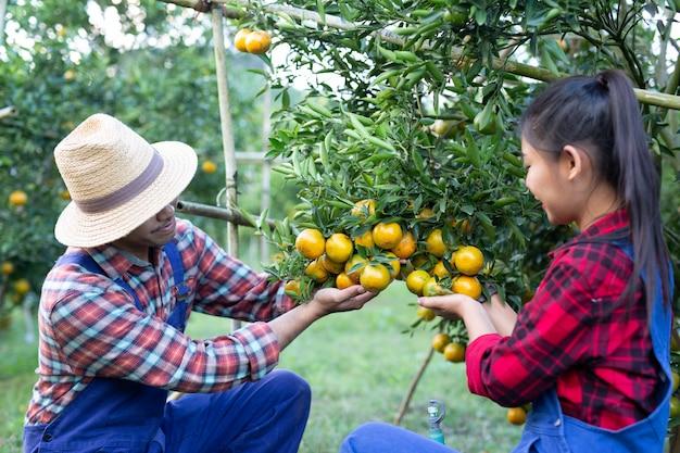 Молодые фермеры собирают апельсин