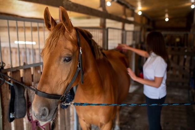レースや乗馬のトレーニングの準備中に馬小屋で若い茶色の競走馬の世話をする若い女性介護者