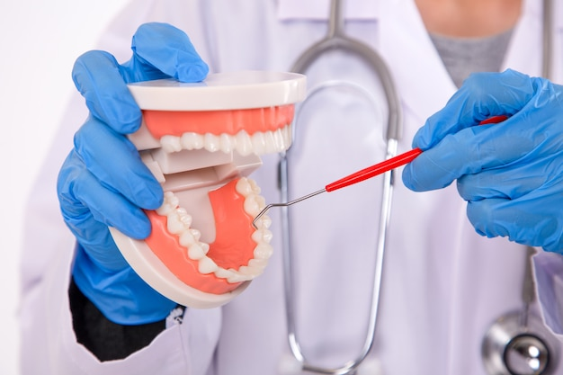 Young female dentist cleaning dental tooth model. care for healthy teeth.