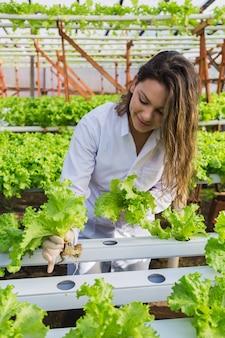 수경 야채 농장에서 젊은 여성 엔지니어-젊은 백인은 그녀의 수경 유기농 야채 농장에서 야채를 수확하는 동안 미소를지었습니다.