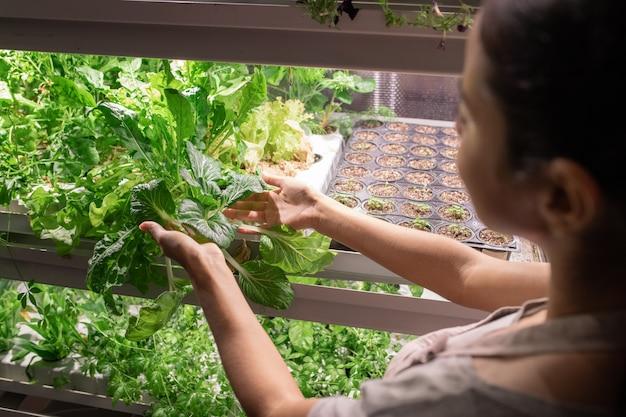 온실에서 작업하는 동안 성장하는 식물 중 하나의 녹색 잎을 들고 젊은 여성 농부 또는 선택 주의자