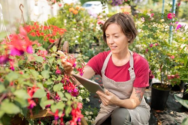 その種についてのオンラインデータを読みながらピンクの花と花壇で座っているタッチパッドを持つ若い女性農家
