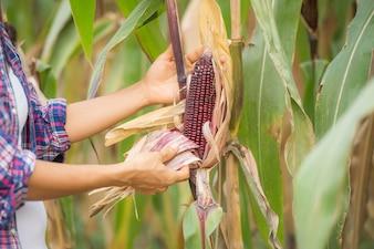 молодая женщина-фермер, работающая в поле и проверяющая растения