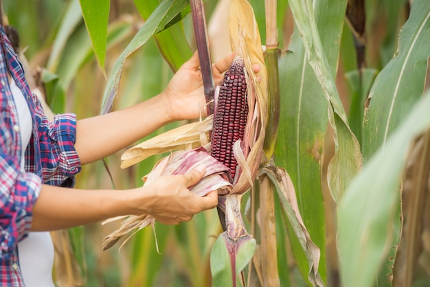 현장에서 일하고 식물을 검사하는 젊은 여성 농부