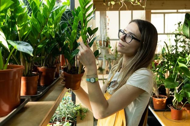 꽃 가게를위한 관엽 식물과 온실에서 젊은 여성 플로리스트 작업