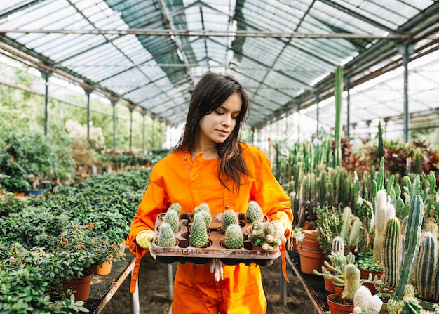 Young female gardener holding succulent plants in greenhouse