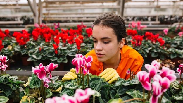 Молодая женщина-садовник, глядя на розовый цветочный горшок