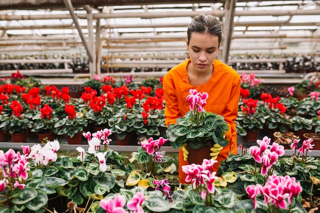 Young female gardener picking pink flower pot