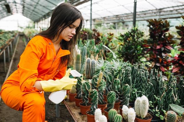 Молодая женщина-садовник, распыляющая воду на суккулентных растениях в теплице