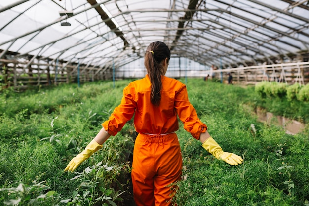 Young female gardener touching fresh plants in greenhouse