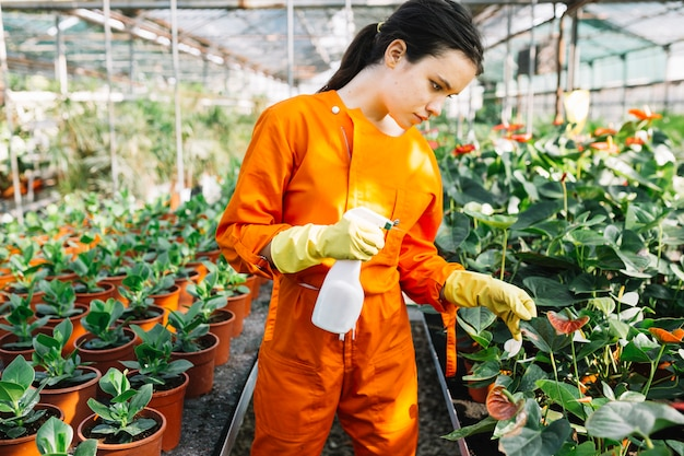 Young female gardener with spray bottle examining plant in greenhouse