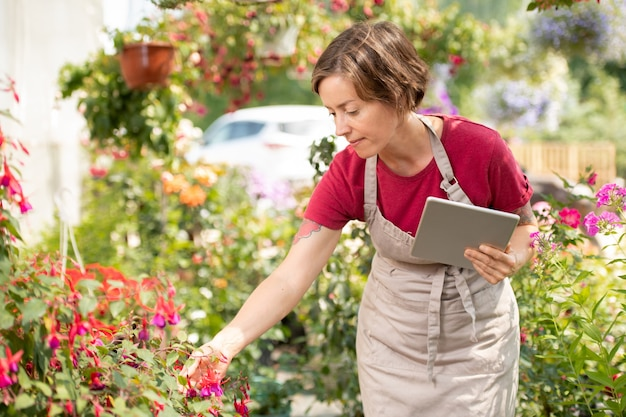Young female gardener with tablet bending over flowerbed while learning features of new sorts of flowers