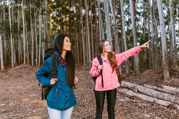 若い、女、登ること、何か、彼女、友人、森林、