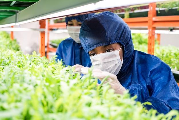 새로운 종류의 원예 식물의 녹색 묘목을 돌보는 보호 작업복의 젊은 여성 연구원