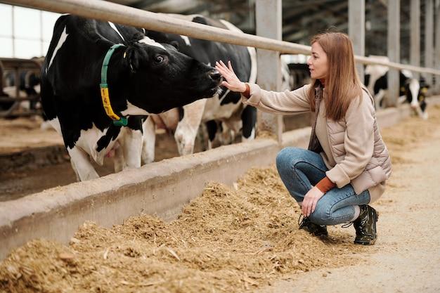 Молодая работница крупного животноводческого комплекса сидит на корточках у загона с породистым скотом и трогательно носом черно-белой дойной коровы