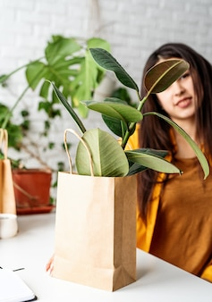Young ficus plant in eco friendy craft bag in home garden