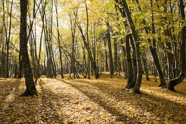 Young forest with deciduous trees