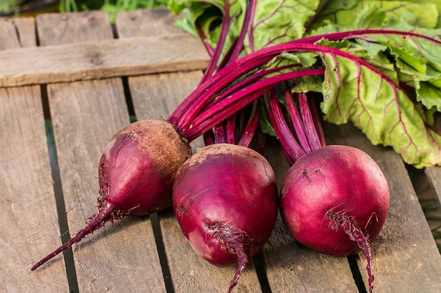Young,fresh beets with tops on  rustic  table