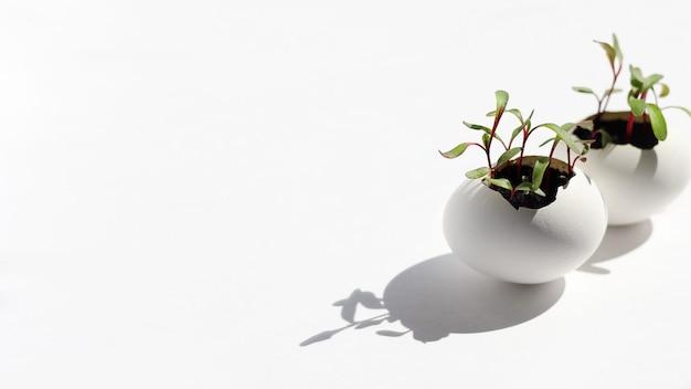 달걀 껍질에 젊은 신선한 채소