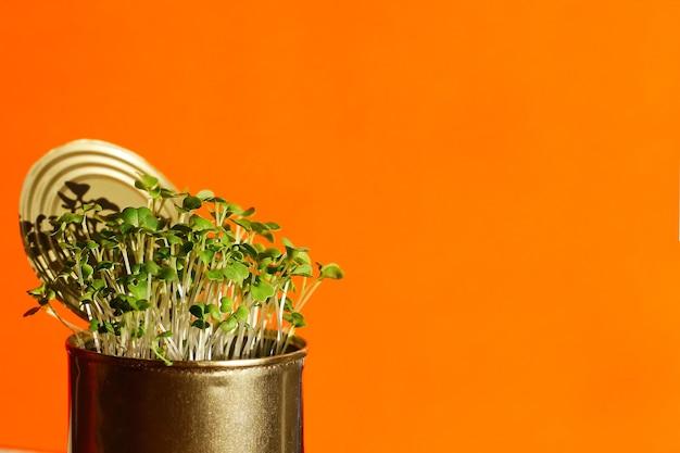 금속에 있는 젊고 신선한 건강한 채소는 주황색 배경 클로즈업에 있습니다. . 집의 자급 자족