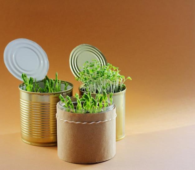금속 캔에 있는 젊고 신선한 건강한 채소. . 집에서 자급 자족하고 자신의 음식을 가공하고 재배하십시오. 종자 발아.