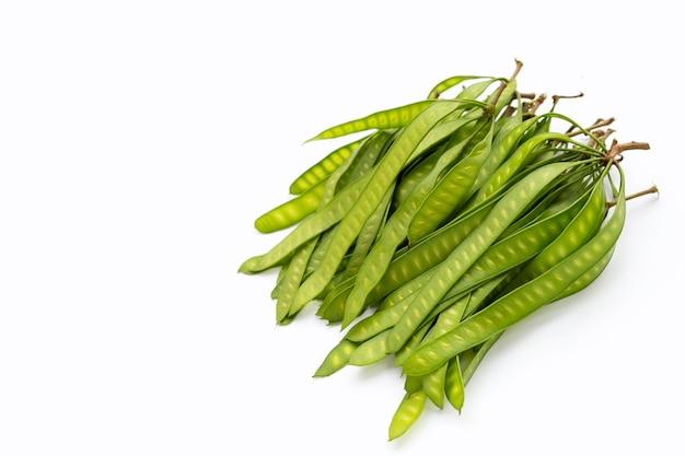 흰색 바탕에 leucaena leucocepphala의 젊은 과일.
