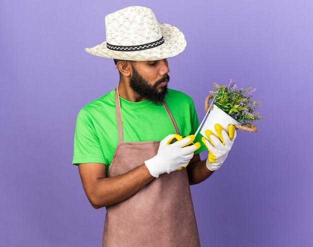 Giovane giardiniere afro-americano che indossa cappello da giardinaggio che misura il fiore in vaso di fiori con metro a nastro isolato su parete blu