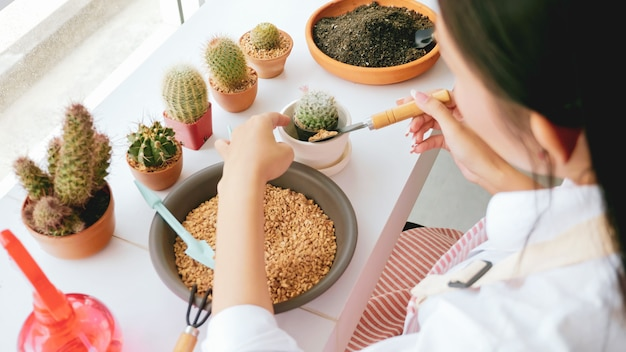 Young gardener woman decorating a flowerpot of cactus in the room.