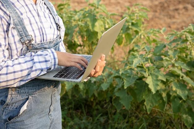 若い女の子はナス農場の農産物をチェックし、品質をチェックするためにコンピューター化されたラップトップを使用しています。農夫は忍耐と勤勉を必要とする職業です。農家や庭師であること。