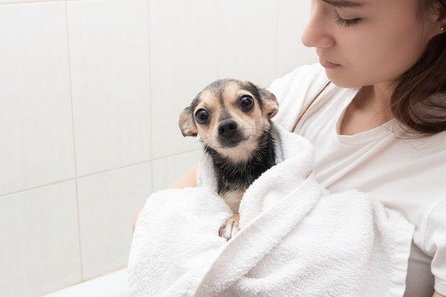 A young girl holds a pet in her arms in a towel after bathing in the bathroom