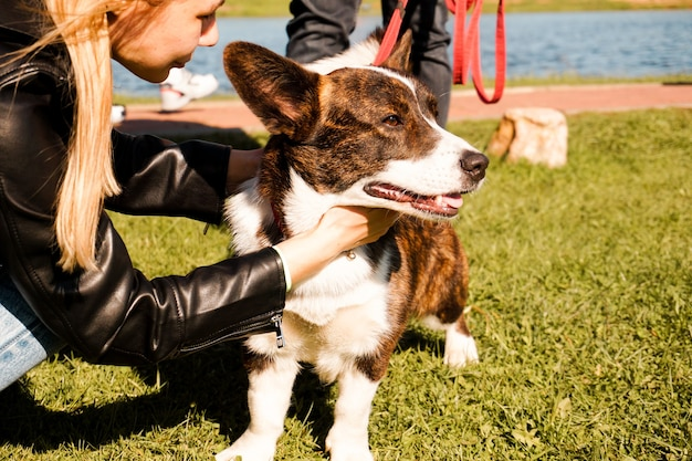 A young girl hugs a brown corgi on a bright summer day sunny day puppy