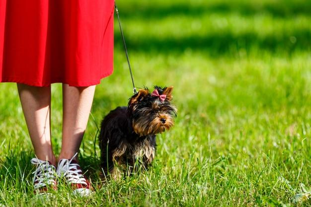Молодая девушка в красных кроссовках стоит на траве со своей собакой