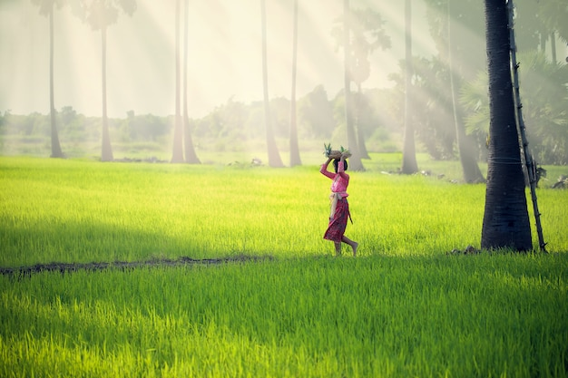 A young girl in indonesian national costume is walking in a rice field by putting a fruit basket on his head.