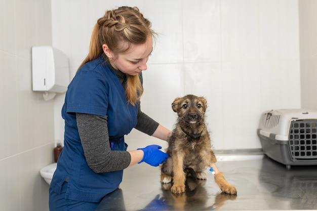 어린 소녀 수의사 의사 시험 행복 강아지.