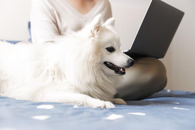 Молодая девушка в очках с помощью портативного компьютера на коленях, сидя на кровати с собакой
