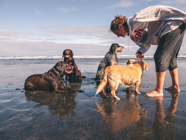 Молодая девушка с пятью собаками на пляже отдыхает после небольшого купания