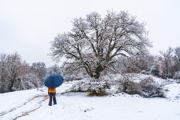 Young girl with a yellow jacket and an umbrella walking through the snow next to a tree. snow in the town of opakua near vitoria in araba