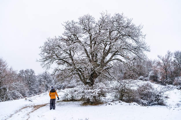 Young girl in a yellow jacket walking through the snow next to a tree. snow in the town of opakua near vitoria in araba