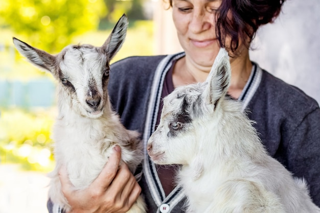 Young goatling on the hands of a woman. a woman shows love for pets_