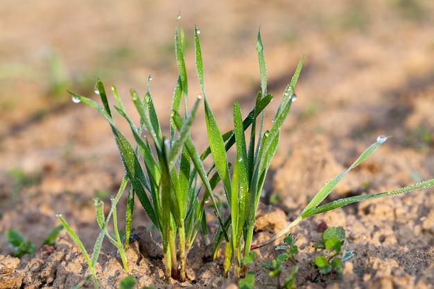 촬영하는 어린 잔디 식물