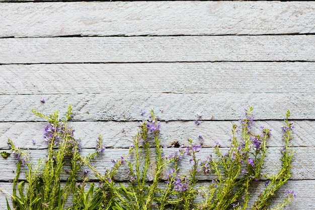 오래 된 나무 테이블에 젊은 잔디 보라색 라벤더 거짓말