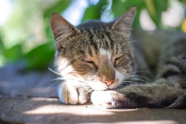 Молодой серый кот спит на деревянном столе на открытом воздухе на солнце