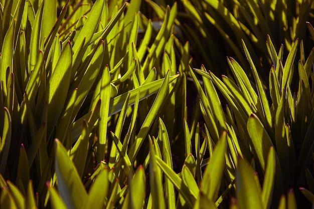 젊은 녹색 잔디는 정원의 열린 필드에서 자랍니다.