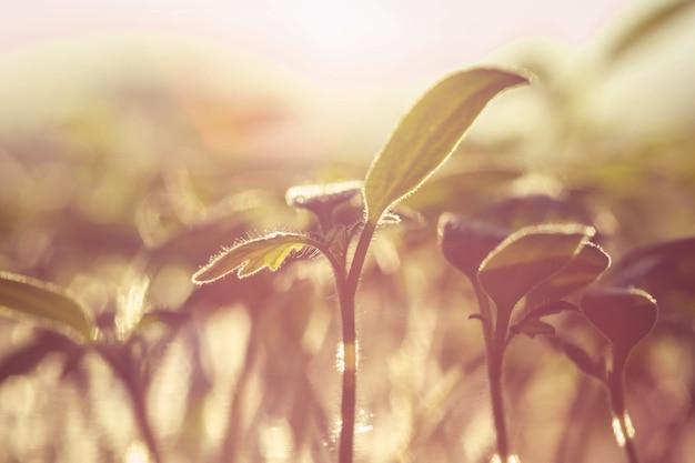 庭の野原に若い緑の草が生えています