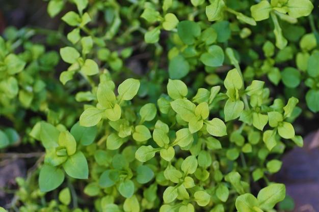 Молодые зеленые листья фон из листьев