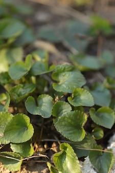 若い緑の葉の葉の背景