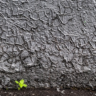 The young green plant grows from a crack in the grunge wall.
