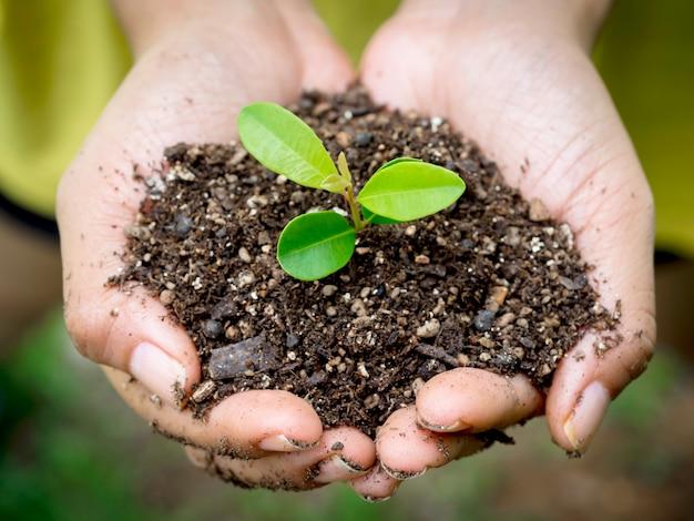 손에 젊은 녹색 식물. 햇빛과 함께 흐릿한 녹색 배경에 유기농 토양에서 새싹이 자라는 식물을 들고 있는 여성의 손을 닫습니다. 생태, 지구의 날, 농업 및 원예 개념.