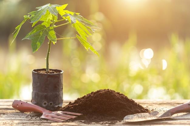 나무 테이블에 심기 위해 플라스틱에 젊은 녹색 식물